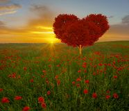 Rood hart gevormd boom-symbool van liefde en de Dag van Valentine ` s royalty-vrije stock afbeelding