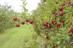 Rood - heerlijke appel Royalty-vrije Stock Foto