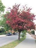 Rood hout in de straten Polen Royalty-vrije Stock Foto's