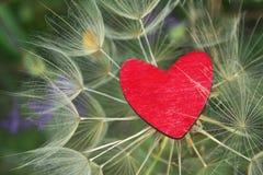 Rood houten hart op een mooie dandalionachtergrond royalty-vrije stock foto