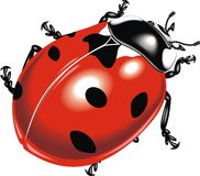 Rood insect royalty-vrije illustratie