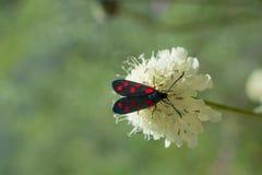 Rood insect in de aard stock afbeelding