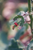 Rood insect op droog blad Stock Foto's