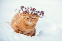 Rood katje in een Kerstmiskroon stock foto