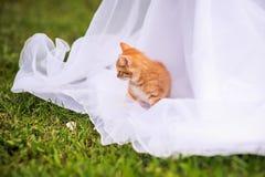 Rood katje op een huwelijkskleding royalty-vrije stock fotografie