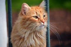 Rood kattenportret dat in Istanboel, Turkije wordt gemaakt Stock Foto