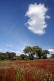 Rood landschap royalty-vrije stock afbeeldingen