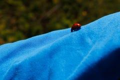 Rood lieveheersbeestje op blauw overhemd royalty-vrije stock foto