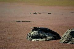 Rood Meer bij Streek 5 van Ranthambore Tiger Reserve Stock Afbeeldingen