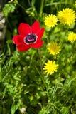 Rood met gele bloemen Stock Afbeeldingen