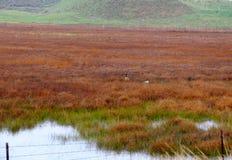 Rood moerasland Stock Foto's