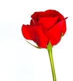 Rood nam bloem toe Royalty-vrije Stock Afbeelding
