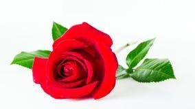 Rood nam bloem toe Royalty-vrije Stock Fotografie