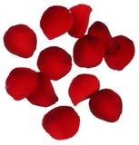 Rood nam bloemblaadjes die op witte achtergrond worden geïsoleerd= toe Stock Afbeeldingen