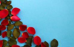 Rood nam bloemblaadjes op een blauwe achtergrond worden verspreid die toe stock foto
