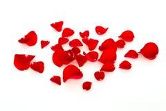 Rood nam bloemblaadjes toe Stock Afbeelding