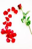Rood nam bloemblaadjes toe Royalty-vrije Stock Foto