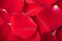 Rood nam bloemblaadjesachtergrond toe stock afbeelding