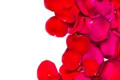 Rood nam bloembladeren op witte achtergrond worden geïsoleerd die toe valenti Royalty-vrije Stock Foto's