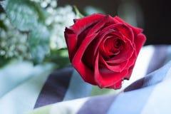 Rood nam bloesem, met close-up op bloemblaadjes toe, leggend op een gestreept hoofdkussen Stock Afbeelding