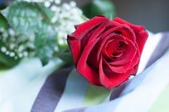 Rood nam bloesem, met close-up op bloemblaadjes toe, leggend op een gestreept hoofdkussen Stock Foto's