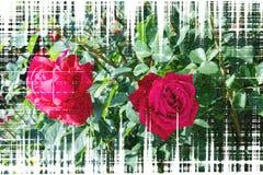 Rood nam bloesems op de stam - Tuinbloemen die in de zomer, het geweven ontwerpen bloeien toe vector illustratie