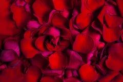 Rood nam de achtergrond van bloembladeren toe Valentine of het Huwelijk begroet Stock Afbeeldingen