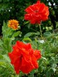 Rood nam in de tuin toe Stock Foto's