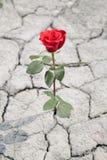 Rood nam in droge aarde toe Stock Afbeeldingen