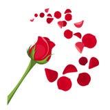 Rood nam en bloemblaadjes toe. stock illustratie