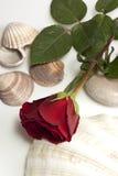 Rood nam en shells toe royalty-vrije stock foto's