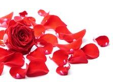 Rood nam geïsoleerden bloemblaadjes toe royalty-vrije stock afbeelding