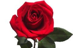 Rood nam geïsoleerdt op witte achtergrond toe stock foto