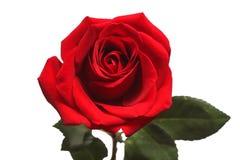Rood nam geïsoleerdt op witte achtergrond toe stock afbeelding