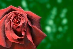 Rood nam groene achtergrond toe Royalty-vrije Stock Fotografie