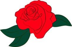 Rood nam met groene bladeren op witte achtergrond toe Stock Fotografie