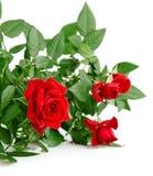 Rood nam met groene bladeren toe Royalty-vrije Stock Foto