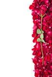 Rood nam op bloemkroon toe Stock Afbeeldingen