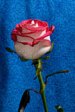 Rood nam op een stam toe Royalty-vrije Stock Fotografie
