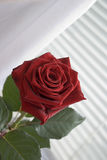Rood nam op toe zonneblinden Royalty-vrije Stock Foto's