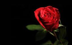 Rood nam op zwarte achtergrond toe Royalty-vrije Stock Foto