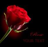Rood nam toe. St. Valentine Dag Royalty-vrije Stock Afbeelding