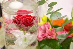 Rood nam in waterclose-up toe royalty-vrije stock afbeeldingen