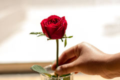 Rood nam wit, in de donkere tijd van liefde, exemplaarruimte toe Royalty-vrije Stock Foto's