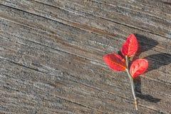Rood op grijs Stock Afbeeldingen