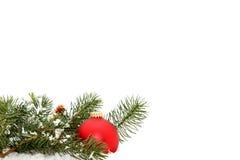 Rood Ornament in Pijnboom Royalty-vrije Stock Foto's