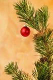 Rood ornament in pijnboomtak Royalty-vrije Stock Afbeeldingen
