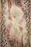 Rood oud blad met lagenachtergrond Stock Afbeelding