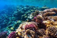 Rood overzees onderwaterkoraalrif Stock Fotografie