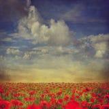 Rood papaversgebied met blauwe hemel Stock Fotografie